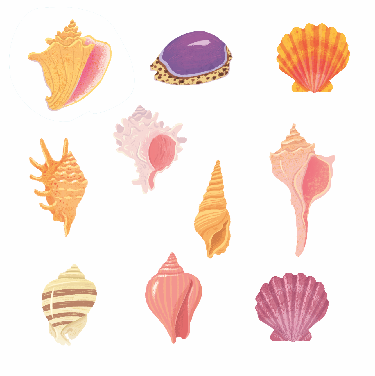 Jamie Tablason Illustration different types of shells