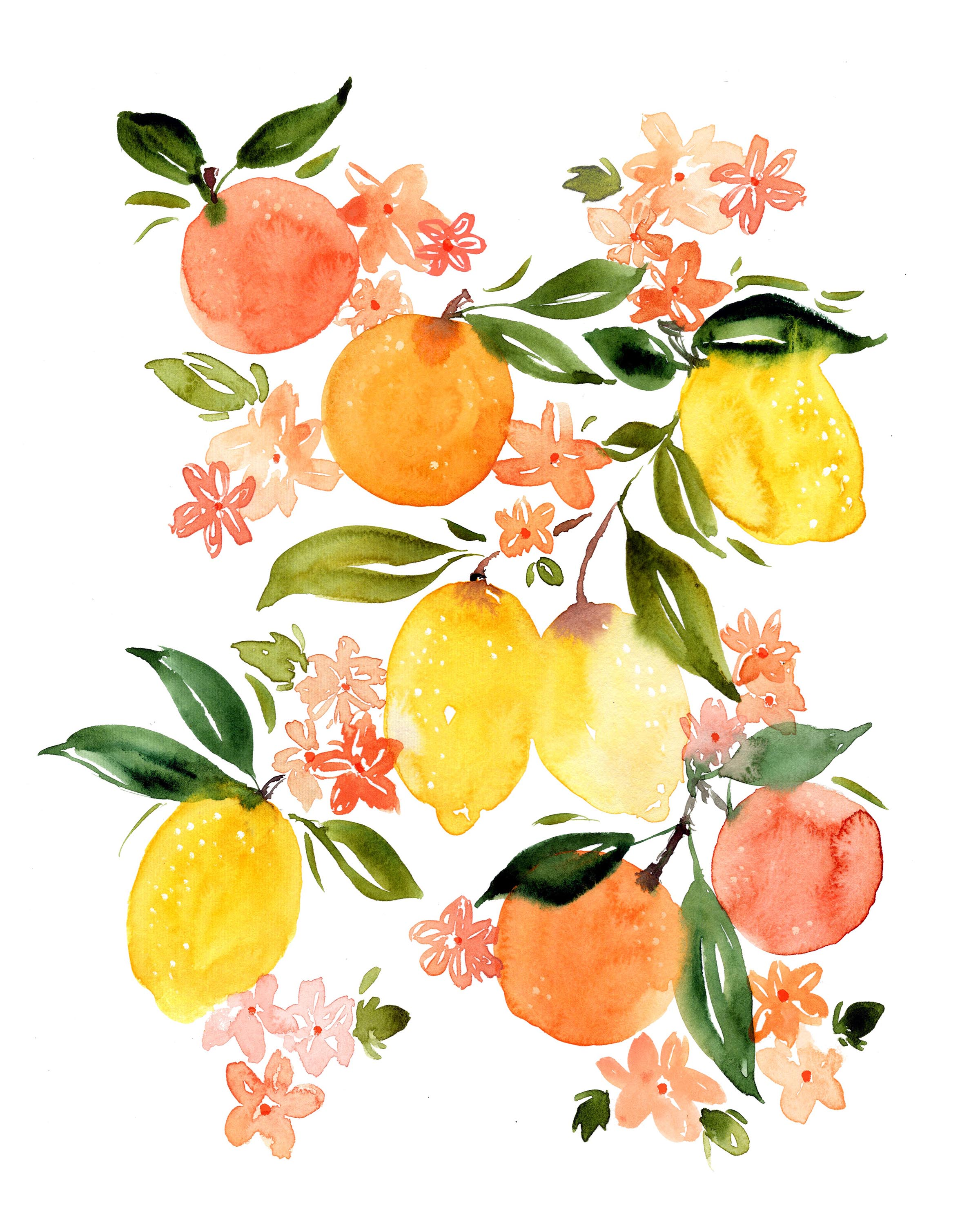 Sara Berrenson Illustration  watercolor oranges and lemons